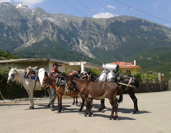 13 Albania