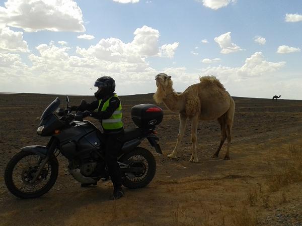 Wielbłądy Maroko KLE 500