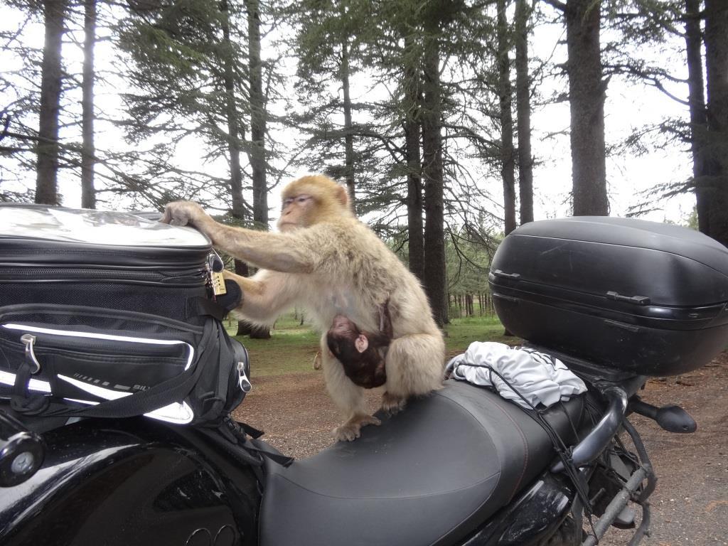 maroko_tankbag_ape_motocyklicznie.jpg